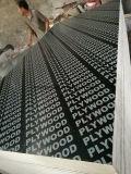 17mmの海洋の合板か豪華なPlywooodまたはベニヤPlywooodまたは商業合板