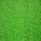 Sports Golf (GFN)のための最もよいQuality Artificial Grass