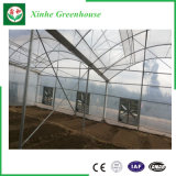 Парник Venlo одиночной пяди режима автоматического управления стеклянный для земледелия