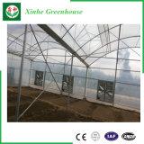 Comando automático de gases com efeito de vidro de Venlo span único para a agricultura