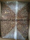 Les fèves Hot Sale Fèves rôti croustillant de fèves