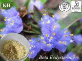 100% Natural Extracto Beta-Ecdysone Cyanotis vaga