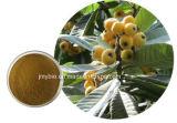 Acide ursolique 20% ~ 98% Extrait naturel de feuilles de loquat allégant la toux