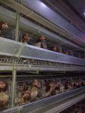 Maquinaria agrícola de aves domésticas para frangos de frango