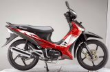 Cub Moto / Dirt Bike (SP110-5)