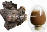 Polisaccaride di 10%~50%, estratto naturale puro del fungo di Chaga/estratto Obliquus di Inonotus