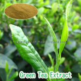Extrait de thé vert les polyphénols de thé