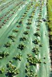 100GSM Weed Matte mit Löchern