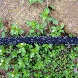Conservar mangueira do Soaker do gotejamento da água a micro