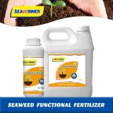 Raiz de adubo orgânico funcional de algas vencedor