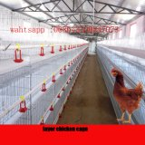 Automatic Poultry Farming Equipment/Chicken To bush-hammer Cage