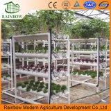 Sistemas hidropónicos del invernadero de la alta calidad para la planta