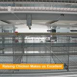 H печатает гальванизированные клетки на машинке цыпленка слоя конструкции ячеистой сети для сбывания