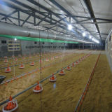 Strumentazione d'alimentazione di vendita 2015 del pollo caldo di pollicultura