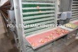 La capa de un marco de la jaula de pollo de granja de ganado
