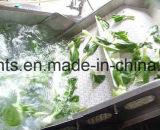 Máquina de lavar do rolo da escova do processamento vegetal