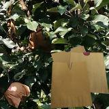 Insecto Anti funcional a prueba de agua de frutas Bolsa desechable papel creciente
