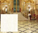 Tegel van de Vloer van Kajaria de Ceramische in Wit