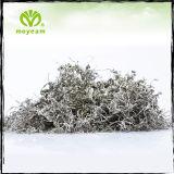 Meilleurs organiques garder la forme des feuilles de thé Moyeam célèbre tisane