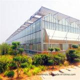 Het grote Kant en klare Project van de Serre van het Glas van de multi-Spanwijdte van de Grootte voor Groente