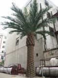 工場価格の屋外の人工的なナツメヤシの木