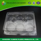 Wegwerfkuchen, der transparenten Plastikkasten verpackt