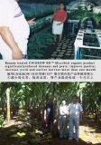 バナナの植わることのUnigrowの生物有機肥料