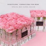 Cassa conservata acrilica del contenitore di fiore della Rosa della radura calda di vendita