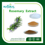 Fabbrica Supply  Natural  Estratto Rosemary&#160 della pianta; Extract  Acido di Carnosic