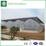 Singolo fornitore della serra del film di materia plastica del traforo di vendita calda per l'orticoltura
