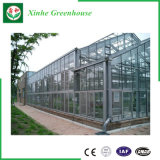 De Serre van het Glas van het Type van Venlo van de multi-spanwijdte