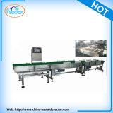 Wäger-sortierende Maschine für Lebensmittelindustrie