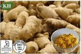 Extracto de jengibre Zingiber officinale; Gingerols; 5% al 20%