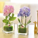 Vaas van het Glas van de Bloem van de Vorm van de Cilinder van de Vazen van het Glas van de Decoratie van het huis de Lange