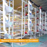 Automatisches Bratrost-Geflügelfütterung-System für h-Typen Huhn-Rahmen