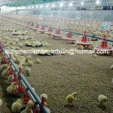 Автоматический подавать цыплятины и система ниппели выпивая для бройлера