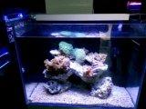Lâmpada Auqarium de LED de 60cm Azul / Branco para Iluminação Coral Reef