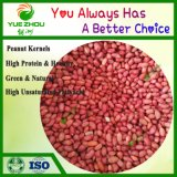 50/60 Kernerls avec la peau rouge arachides 25kg sac sous vide de l'emballage