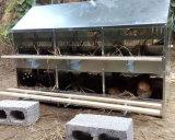 Boîtes à oeufs d'éleveur de grilleur