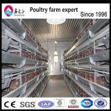 Couche de conception de haute qualité en usine de matériel agricole de poulet