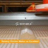 Jaulas de batería de la parrilla del marco de H para las parrillas Growing