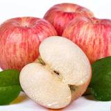 Chine Exportateur meilleur prix des fruits frais Red Fuji Apple