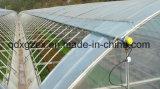 Structure en acier léger Green House pour Vegitable
