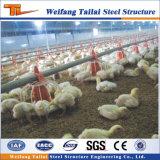 Las aves de corral del uso del pollo de la estructura de acero contienen