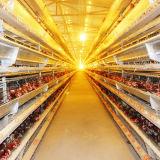 Las aves de corral la elaboración de los equipos de mantenimiento de la China Qingdao para detener el servicio