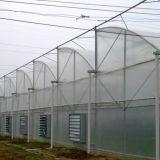 야채를 위한 온실 10 미터 다중 경간 플레스틱 필름