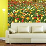 Papel de parede Printable examinado qualidade da tela Poli-De seda genuína da venda da fábrica