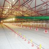 Strumentazione automatica dell'azienda avicola dell'insieme completo di vendita calda