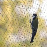 HDPEのハイウェイまたは空港領域のための黒い反鳥の網