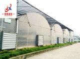 Multi-Span Tunnel expérimentés pour la plantation de serre